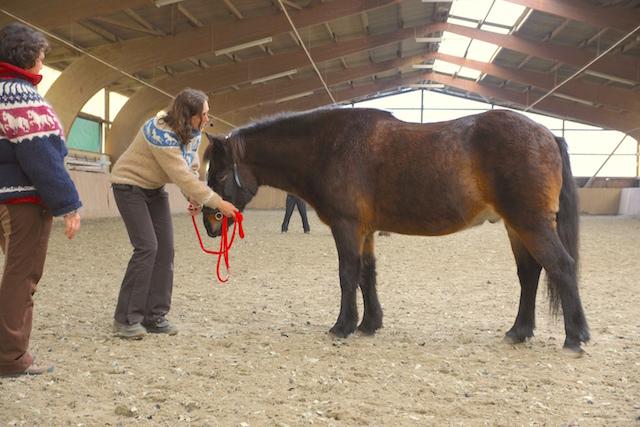steigen pferd beibringen